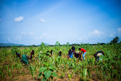Farmers in Francos community who he has supported as part of our Youth Motivations project supporting livelihoods in Karamoja, Uganda.